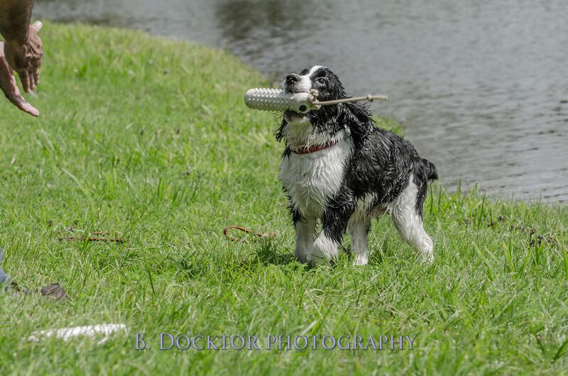 1308_SITFFR dog day_190