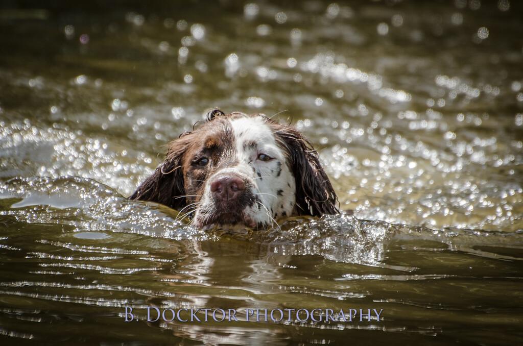 1308_SITFFR dog day_303