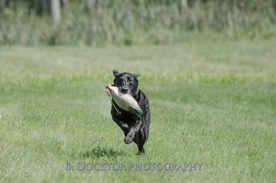 1308_SITFFR dog day_109