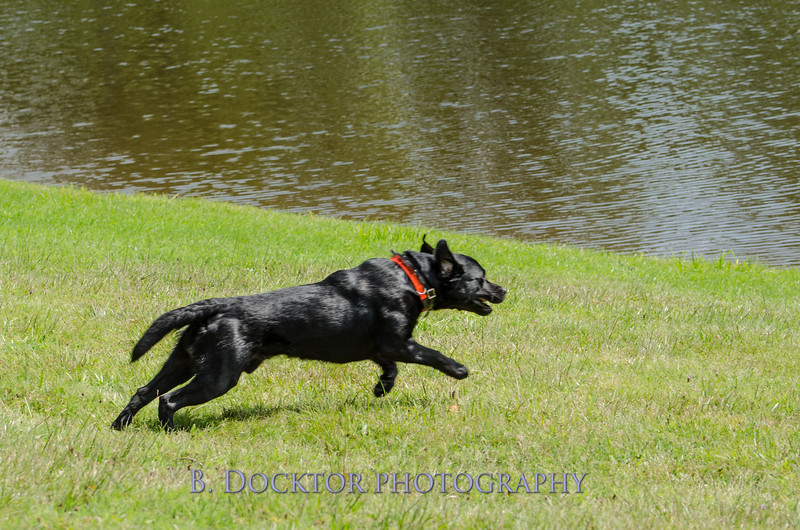 1308_SITFFR dog day_079