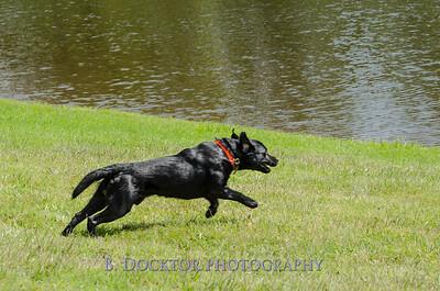 1308_SITFFR dog day_079