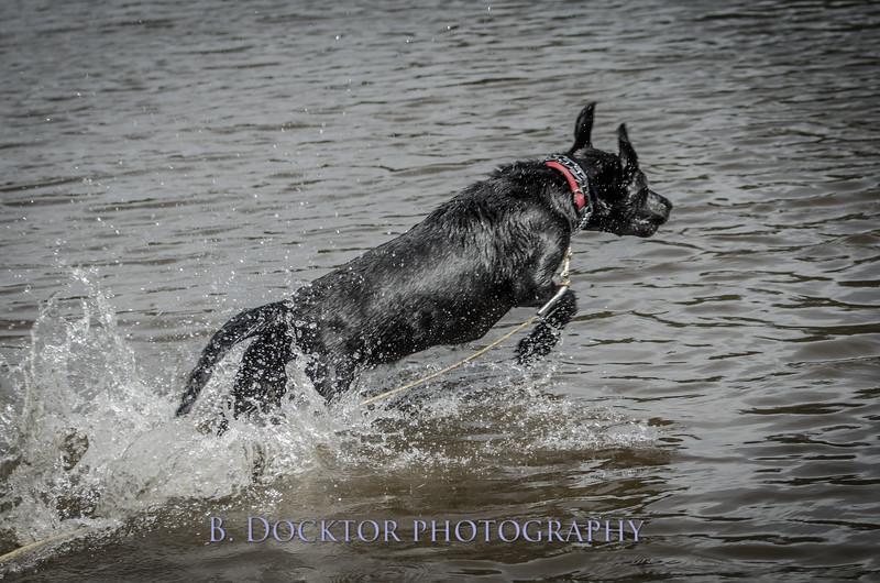 1308_SITFFR dog day_319