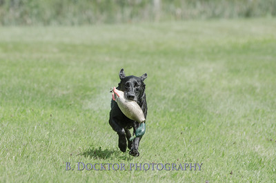1308_SITFFR dog day_111