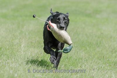 1308_SITFFR dog day_113