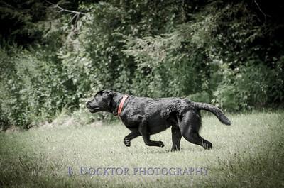 1308_SITFFR dog day_129