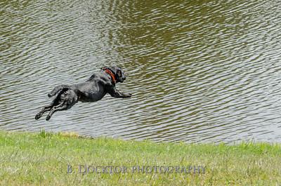 1308_SITFFR dog day_083