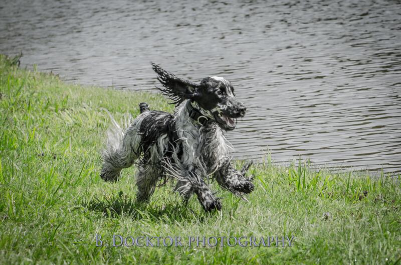 1308_SITFFR dog day_250