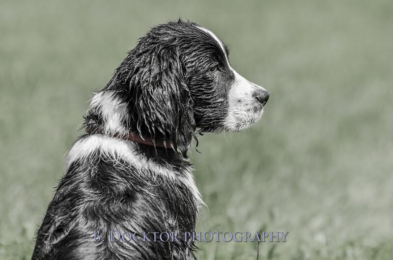 1308_SITFFR dog day_199