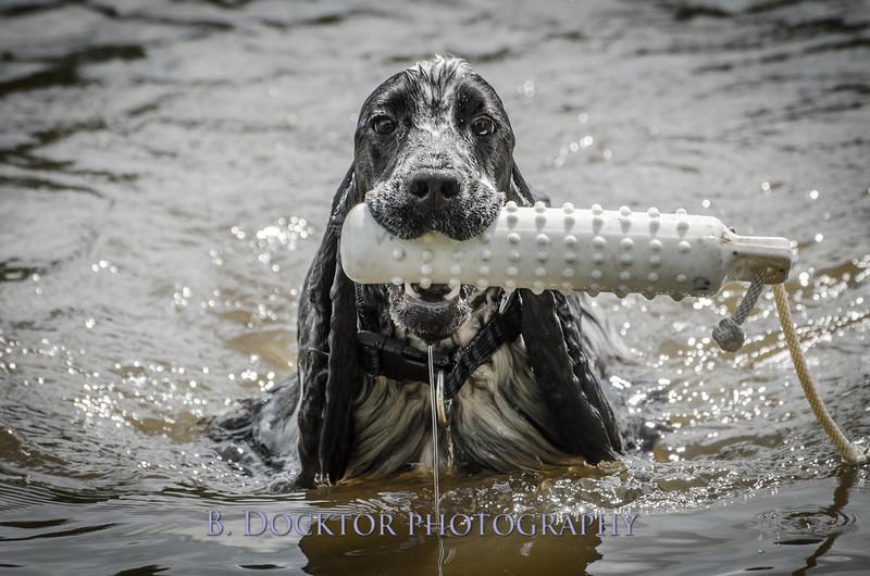1308_SITFFR dog day_239