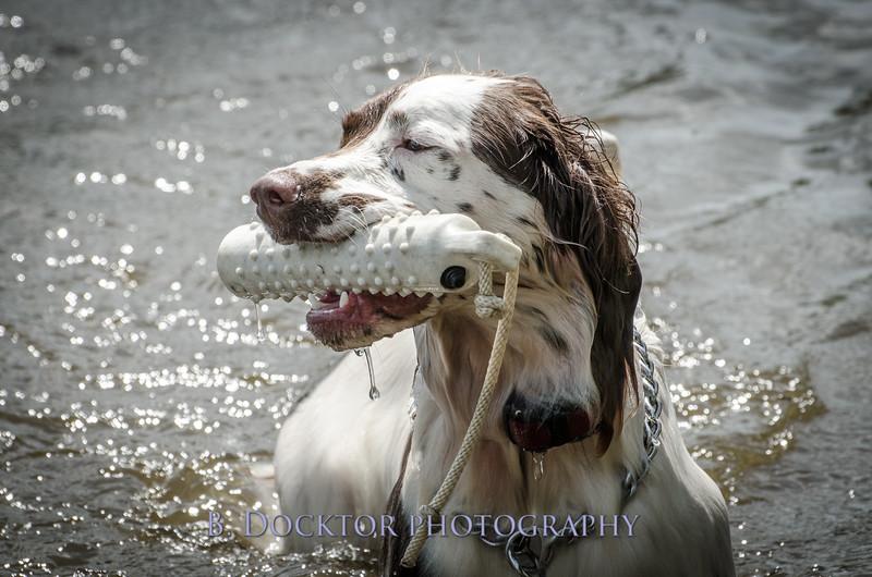 1308_SITFFR dog day_277