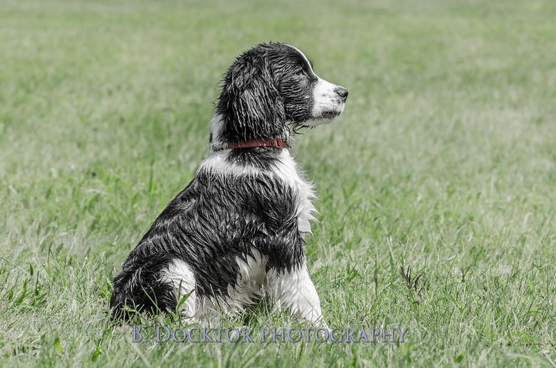 1308_SITFFR dog day_194