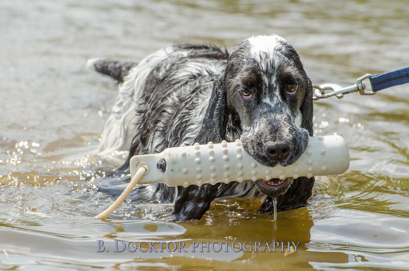 1308_SITFFR dog day_207