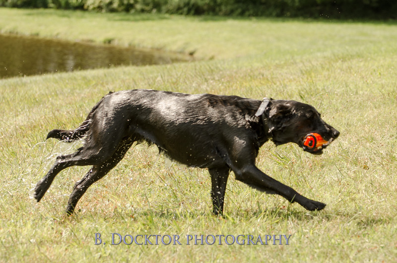 1308_SITFFR dog day_054