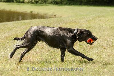 1308_SITFFR dog day_054