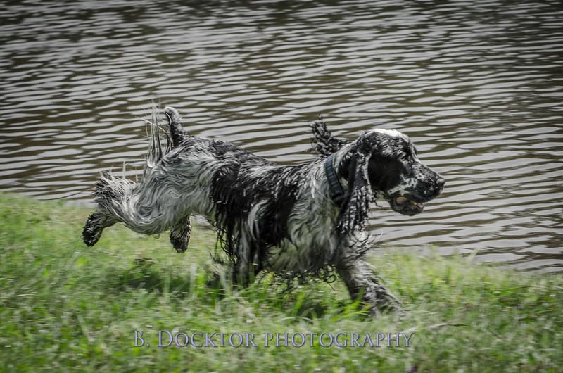 1308_SITFFR dog day_251