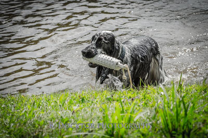 1308_SITFFR dog day_240