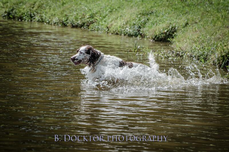 1308_SITFFR dog day_288