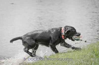1308_SITFFR dog day_141