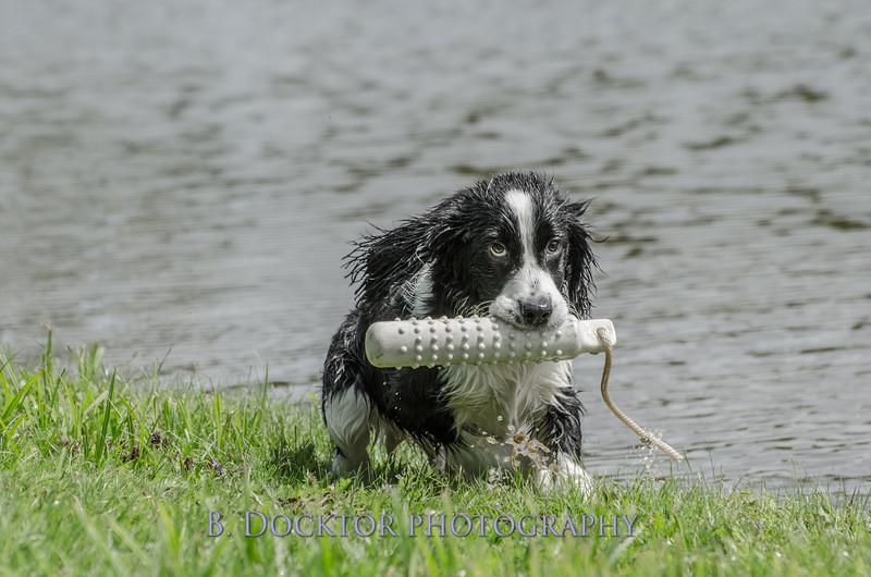 1308_SITFFR dog day_188