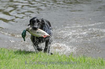 1308_SITFFR dog day_121