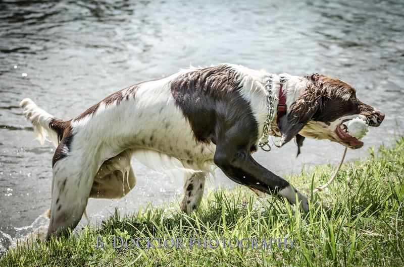 1308_SITFFR dog day_278