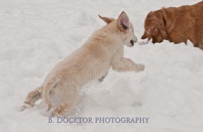 1102_Wilson & snowy morning_010