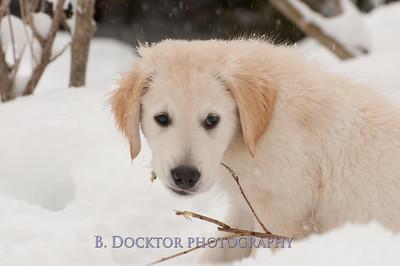 1102_Wilson & snowy morning_056