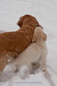 1102_Wilson & snowy morning_001