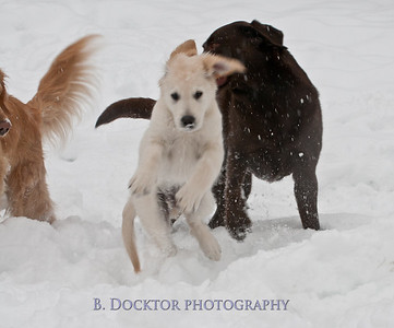 1102_Wilson & snowy morning_039