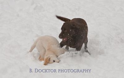 1102_Wilson & snowy morning_034