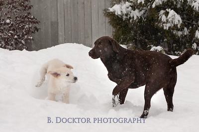 1102_Wilson & snowy morning_006