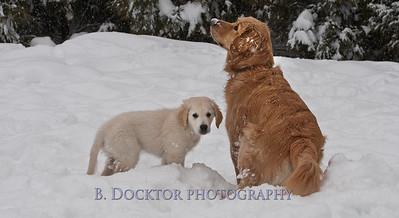 1102_Wilson & snowy morning_005