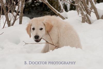 1102_Wilson & snowy morning_053