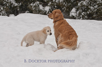 1102_Wilson & snowy morning_004