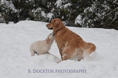 1102_Wilson & snowy morning_002