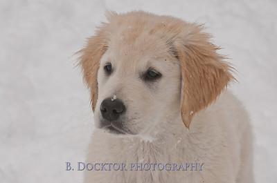 1102_Wilson & snowy morning_033