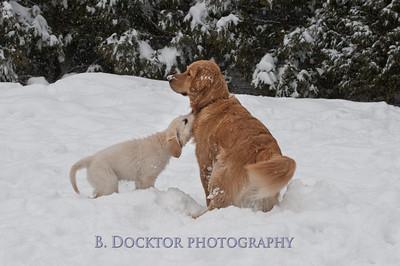 1102_Wilson & snowy morning_003
