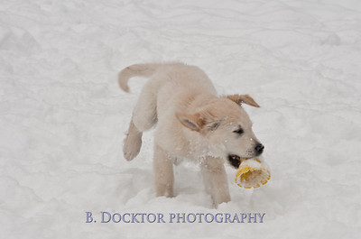 1102_Wilson & snowy morning_007