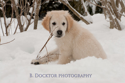 1102_Wilson & snowy morning_049