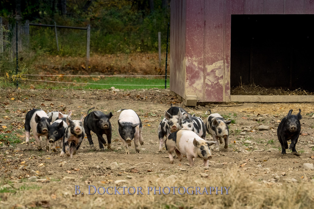 1610_Black Sheep Hill Farm_011