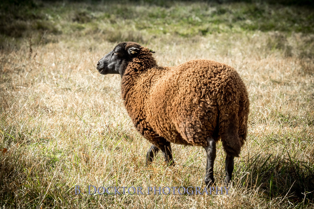 1610_Black Sheep Hill Farm_044