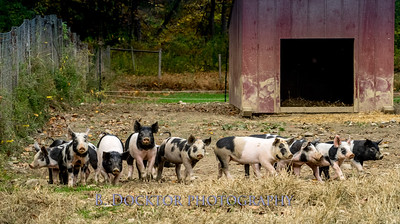 1610_Black Sheep Hill Farm_014