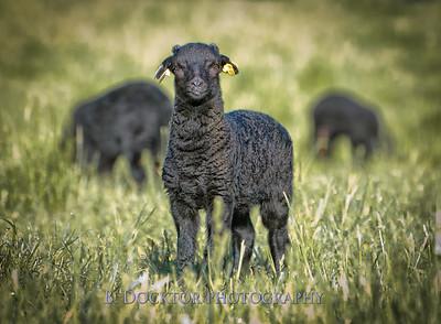1205_Black Sheep Hill Farm_065