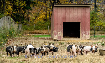1610_Black Sheep Hill Farm_017