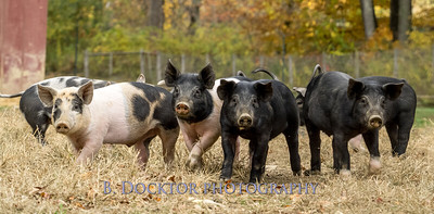 1610_Black Sheep Hill Farm_019