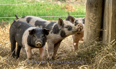 1610_Black Sheep Hill Farm_032