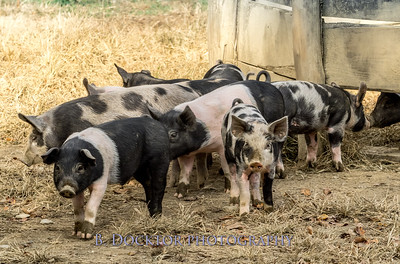1610_Black Sheep Hill Farm_034