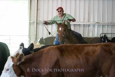 1906_Cattle Sorting at Cowgirl Up Ranch_009