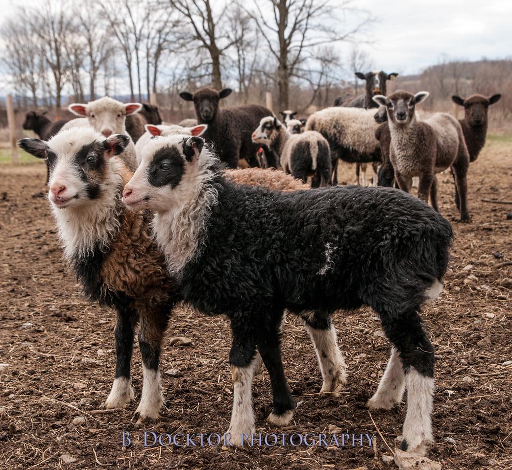 1304_Dashing Star Farm_145