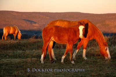 winchell mtn horse_0029